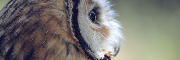 owl3slim