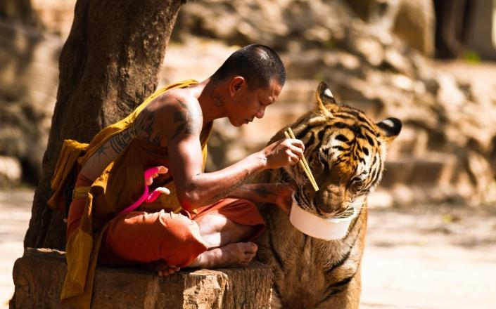 buddhisttiger