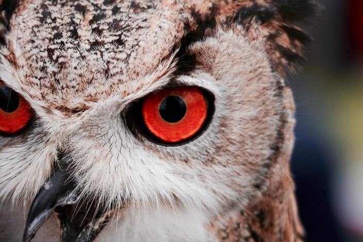 owlcu